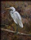 egret perched on a driftwood branch